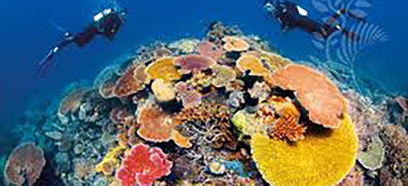 Six Amazing Facts about the Great Barrier Reef | Cairns Tours