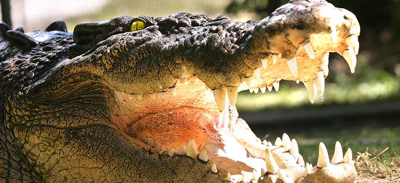 Cairns Wildlife Experiences