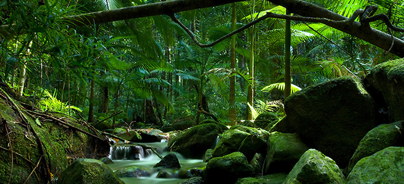 Daintree-National-Park-6