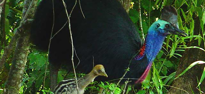 daintree-rainforest1
