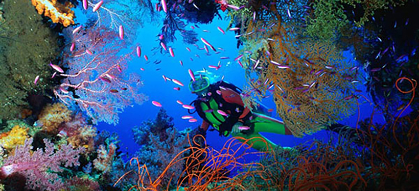 Image result for great barrier reef snorkeling pictures