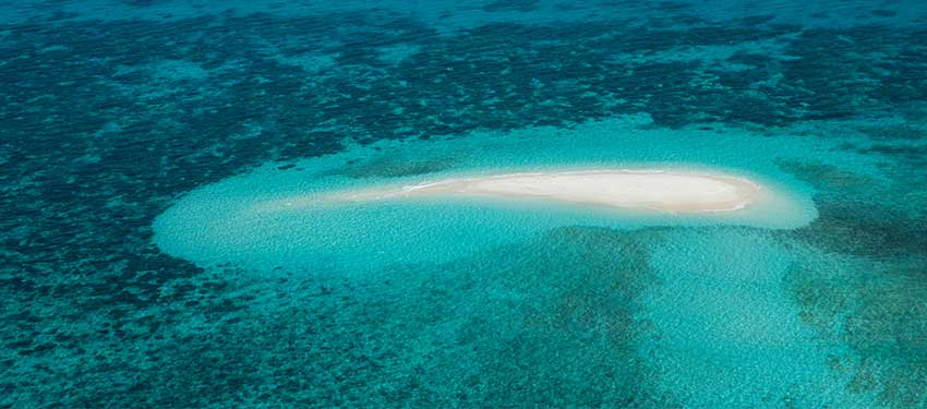 Explore Michaelmas Cay with Passions of Paradise