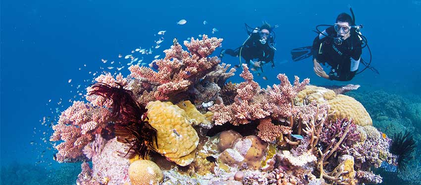 Dive Into a Natural Wonder at the Great Barrier Reef!