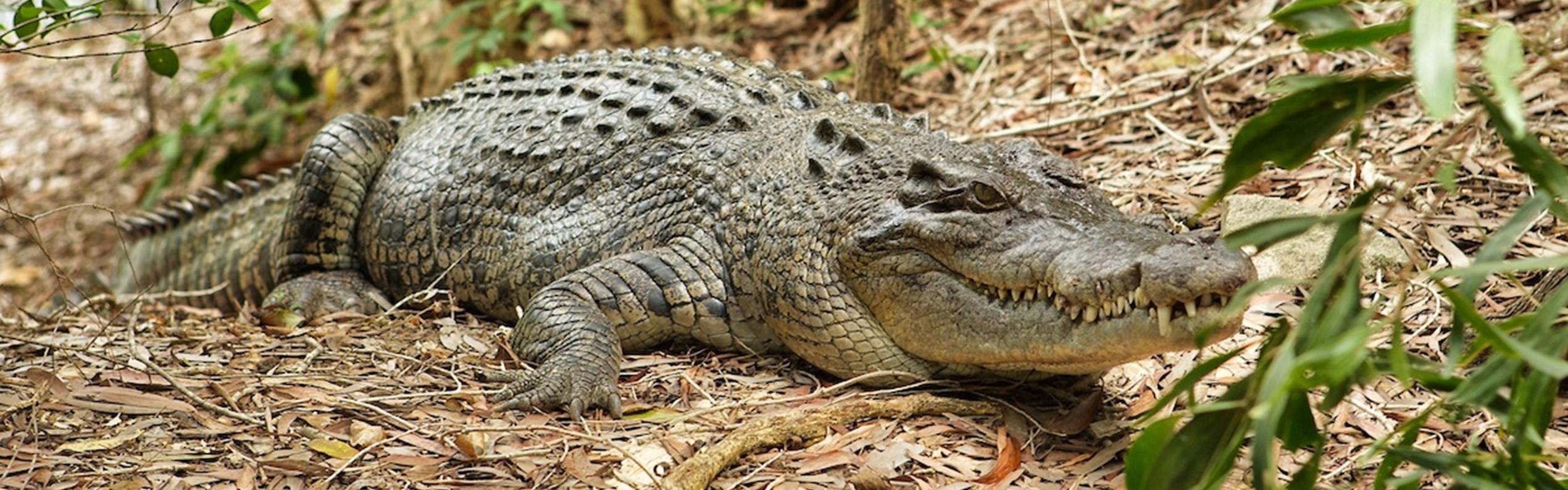 Hartley's Crocodile Adventure (PM)